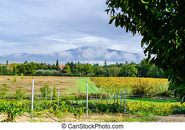 Vineyard at the foot of Mont Ventoux in Provence, France -...