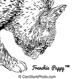 French Bulldog - Side portrait of a French bulldog