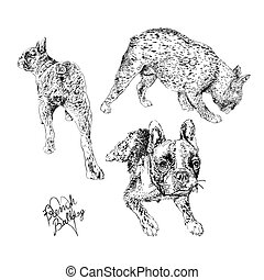 French Bulldog hand made drawings set
