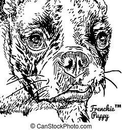 French Bulldog - Front portrait of a French bulldog