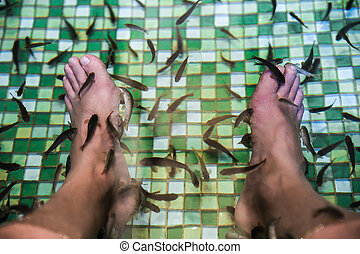 Garra rufa, also called doctor fish eating skin on legs -...