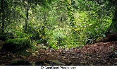 Moving Along Rugged Path Through The Forest - Slowly moving...
