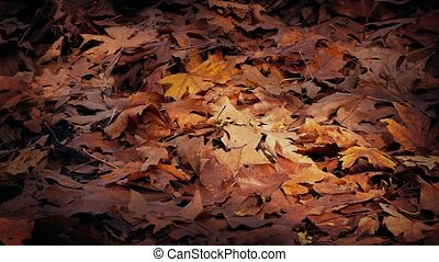 Moving Past Bed Of Dry Fall Leaves - Dolly shot moving...