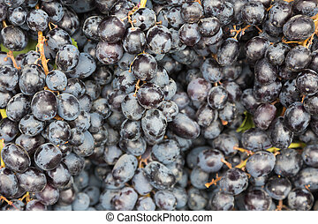 Grape fruit - Black fresh grape fruit