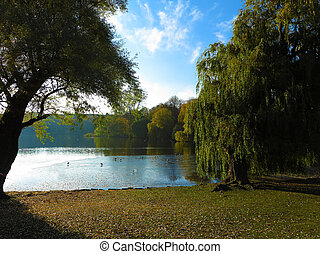 beautiful park with lake - park with lake and willow trees...