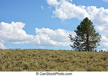 Yellowstone landscape, North America