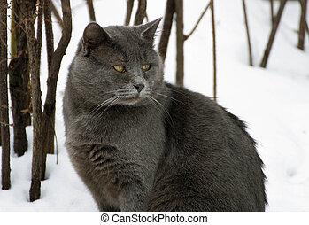 Grey fat cat. - Winter. A ruffled big fat grey cat sitting...