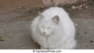 Big fluffy cat sitting in the street in cold weather.