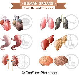 Human Organs Heath Risks Medical Poster - Human organs...