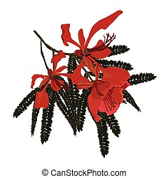 Pionicana Flowers - Red flowering Poinciana Flowering branch...