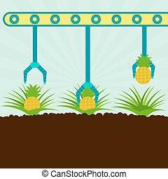 Mechanical harvesting pineapples