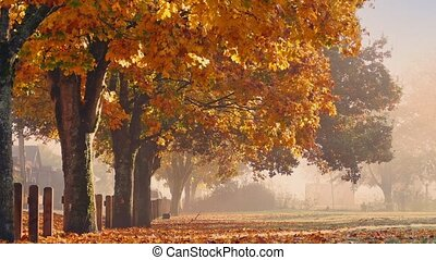 Fall Trees With Falling Leaves And Person Walking - Dolly...
