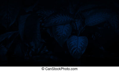 Jungle Plants Waterline At Night - Exotic plants above and...
