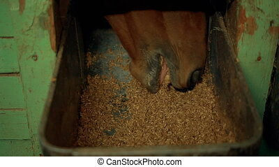 horse stables eat from trough oats - horse stables eat from...