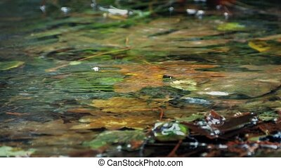 Shallow Woodland Pool In Rainfall - Macro shot of shallow...