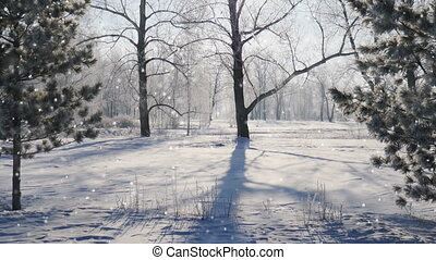 Falling snow in a winter park with snow covered trees, seamless loop