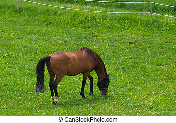 brown horse standing on the pasture and green medow