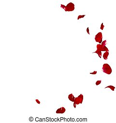 Red rose petals scattered on the floor in a semi-circle....