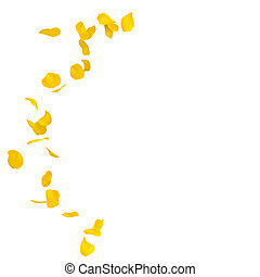 Yellow rose petals scattered on the floor in a semi-circle....