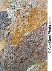 eucalipto, árvore, textura, superfície, tronco