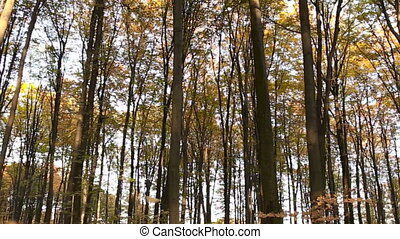 forest trees with yellow leaves to remove the bottom up