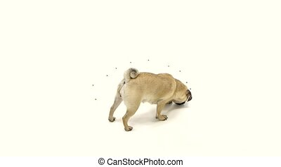 Puppy eats all the food and leaves the toe empty. White background