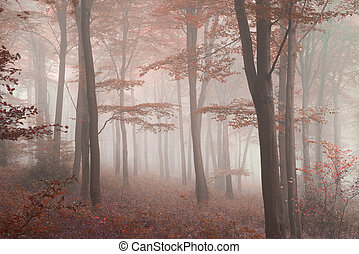 Stunning colorful vibrant evocative Autumn Fall foggy forest...