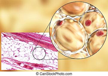 Micrograph,  3D, gorda, Ilustração, celas