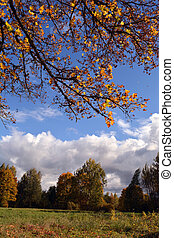 Landscape with maple tree branch with yellow leaves against blue sky