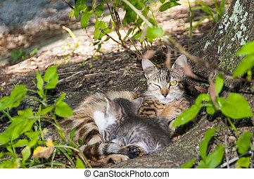 Yellow eyed cat and child - Yellow eyed cat with kitten...