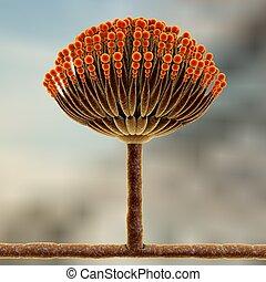 nero, muffa, funghi