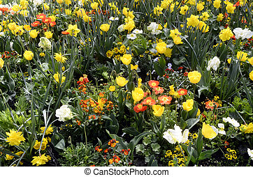 Massif of yellow, orange and white flowers in annecy, savoy