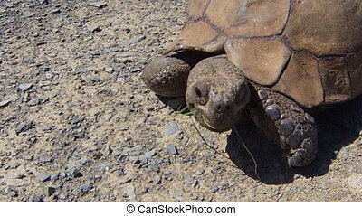 Turtle South African