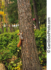 two small curious squirrel on a tree trunk