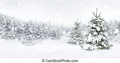 Fir trees in thick snow - Outdoor panorama shot of two young...