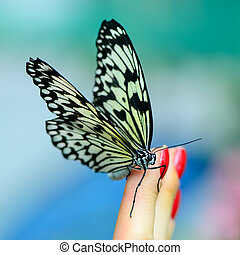butterfly on human finger - beautiful insect butterfly on...