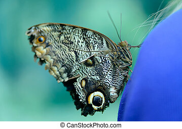 beautiful insect butterfly