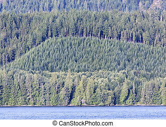 British Columbia Forest - The view of British Columbia shore...