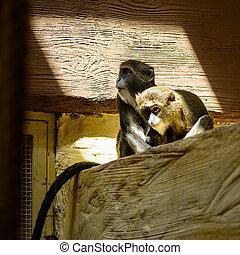 couple monkey animals