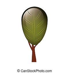 colorful tree with foliage shape leaf ovoid vector...