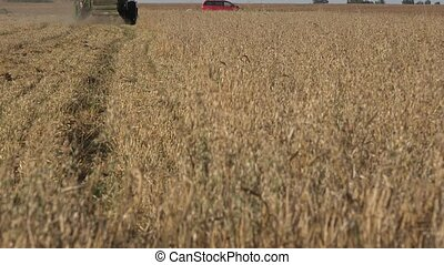 combine in oat field at harvest summertime. Focus change. 4K...