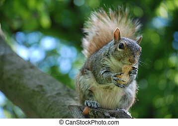 Squirrel Sittiing on a Tree Branch with a Nut - Cute...