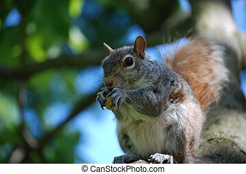 Squirrel Sitting in a Tree with a Peanut - Adorable grey...