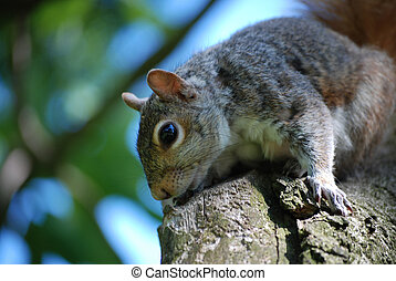 Great Looking Squirrel Sitting on a Tree - Very cute...