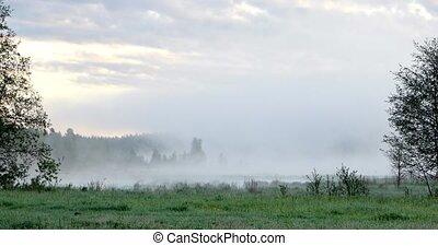 Thick morning fog over the marsh. UltraHD (4K)
