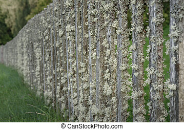 old wooden fence covered with lichen on background of green grass