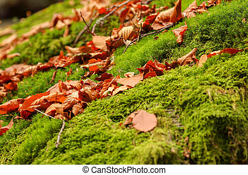 Green Moss background texture