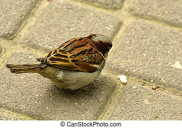 sparrow in the city park