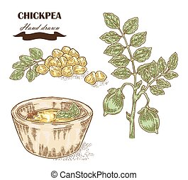 Hand drawn chickpea plant. Seeds, chickpea leaves and plate...