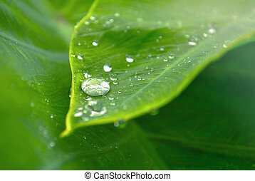 Dew drop on leaves